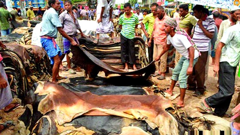 কাঁচা চামড়া রফতানির অনুমতি দিচ্ছে সরকার