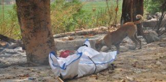 মৃত্যুপুরী দিল্লিতে মৃতদেহ ছিঁড়ে খাচ্ছে কুকুর